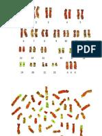 Trabajo Super Hembra Genetica (1)