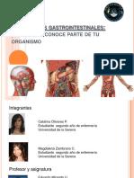 secrecionesgastrointestinales-121213191302-phpapp02