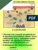 CITOLOGIA Lezione 5 Organuli-Nucleo