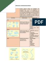 Morfologia y Agrupacion Bacteriana