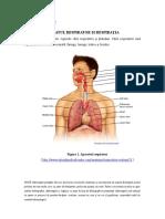 Lp.8 Aparatul Respirator Si Respiratia