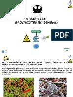 T 10 Bacterias 181