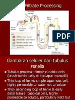 8-Tubular Reabsorption and Secretion GUS-K6