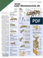 La inquietante disminución de las abejas. Zumbidos en alerta