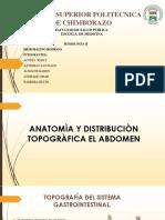 Anatomia y Distribucion Topografica Del Abdomen