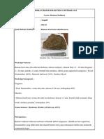 Laporan Resmi Praktikum Petrologi