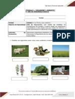 Guia 1 Organismos y Ambiente