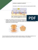 Receptores de Membrana e Acoplados à Proteina G