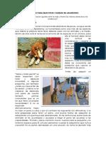 Albergue Para Mascotas Caninas en Abandono