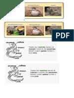 Aves y Reptiles caracteristicas varias