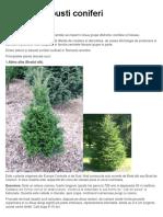 Arbori si arbusti coniferi