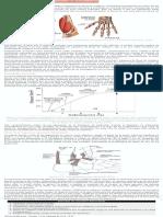 Safari - biomecánica de tendones y ligamentos