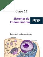 Clase 11 - Sistema de Endomembranas