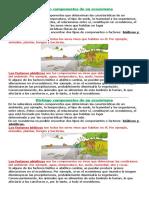 Distingo Componentes de Un Ecosistema