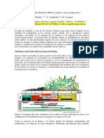 P006 [Ag String Agro] Danos en Cultivo de Trigo Daniel Miralles (18 Cong Aapresid)