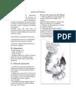 Ficha N 5 IMAGEN INVERTIDA.docx