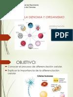 DIFERENCIACIÓN CELULAR  II.ppt