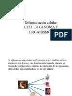 Diferenciación celular I.ppt