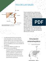Circulación enterohepatica