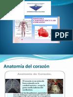 Presentacion Del Sistema Cardiovascular