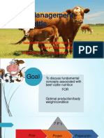 Feeding Management of Beef Cattle