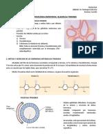 Glandula Tiroides.Fisio.docx