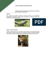Flora y Fauna de La Region Costa