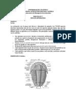 Practica Nº 7. Phylum Arthropoda (1)
