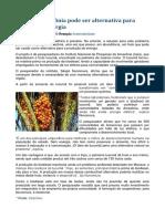 Fruto Da Amazônia Pode Ser Alternativa Para Geração de Energia
