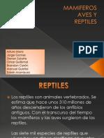 mamiferos-101214160501-phpapp02 (1)