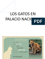 Aìlbum Gatos Palacio (1)