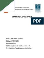 22-36 Hymenolephys nana
