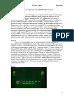 pcr lab report