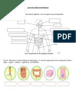 Guia de Ciencias Naturales Sistema Digestivo