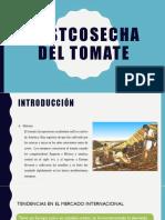 Postcosecha Del Tomate