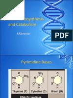 Pyrimidine Biosynthesis and Degradation