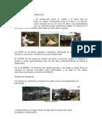 YERBA MATE - proceso de elaboración.doc