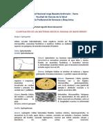 Clasificacion Bacteriana de Bergey 2018