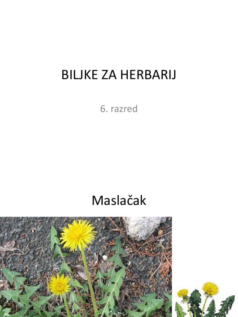 Herbarij biljke za Kako izraditi