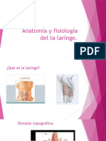 Anatomia Resumida