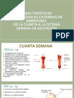 CARACTERÍSTICAS  MORFOLÓGICAS EXTERNAS DE EMBRIONESDE LA CUARTA A (1)