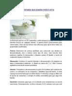 20 Plantas Medicinales Que Puedes Incluir en Tu Botiquín Verde