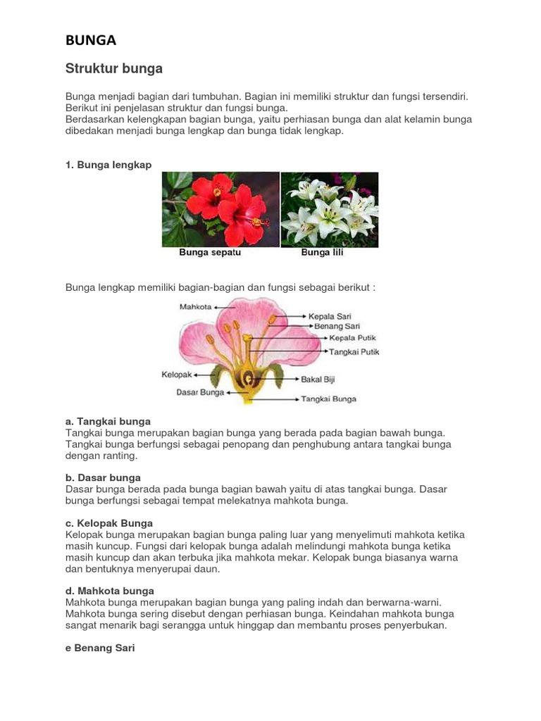 Bagian Dari Bunga Lili