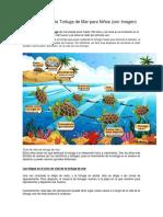 Ciclo de Vida de La Tortuga de Mar Para Niños