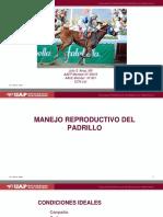 17 - Manejo Reproductivo Del Padrillo y La Yegua