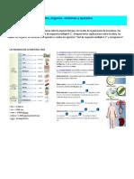 Niveles de Organizacion Celulas