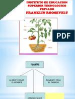 Clase X Plantas y Partes