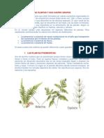 4 Clases de Plantas(Ale)