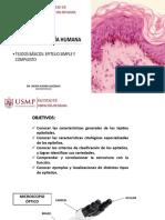 Histologia Usmp 2019 i - Tejido Epitelial