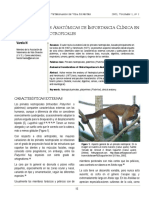 Anatomia Primates